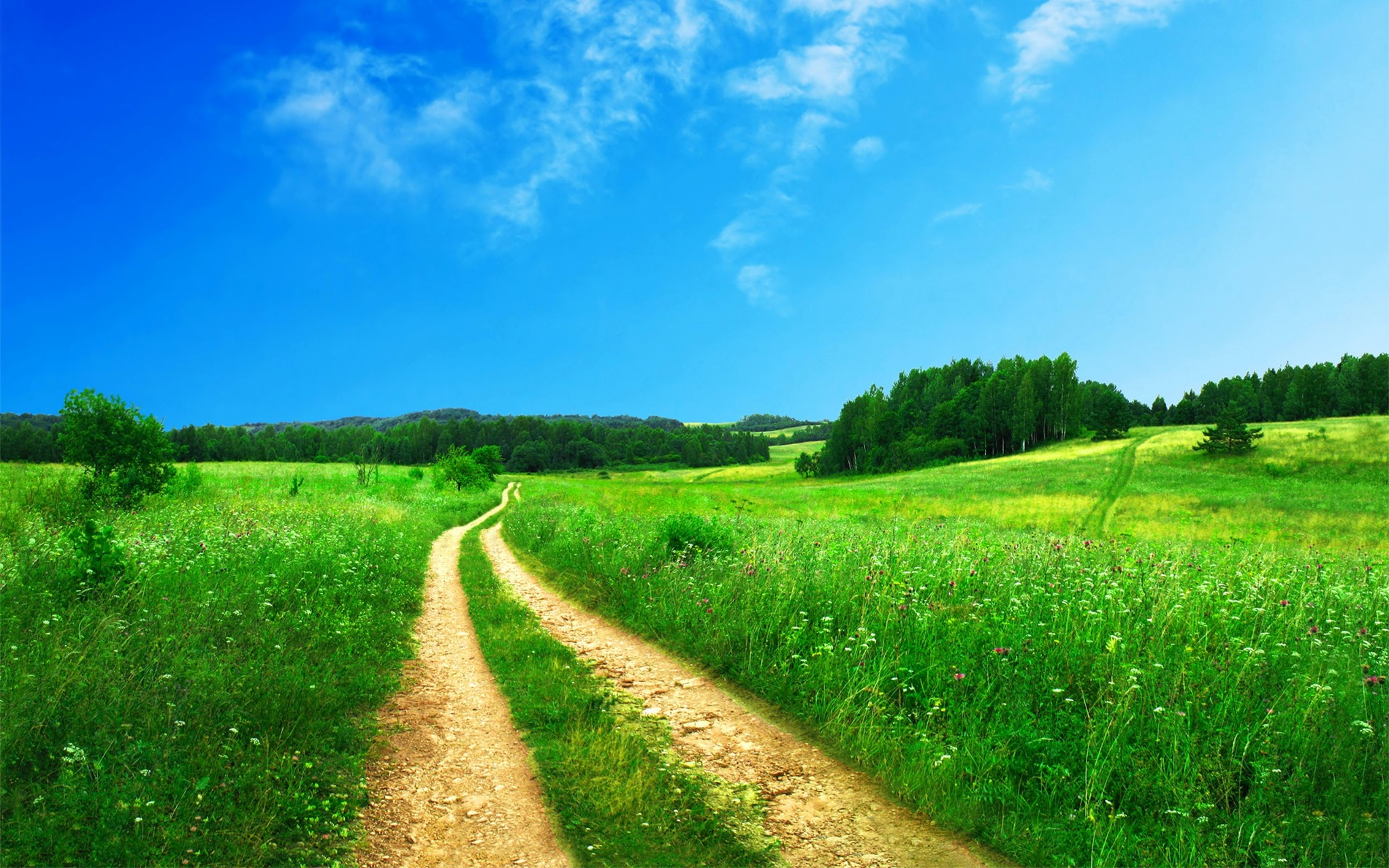 The journey ahead with Natural Allergy Therapies